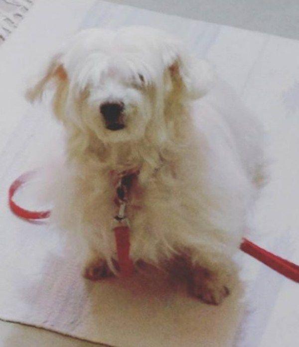 Anupriya Goenka's Pet
